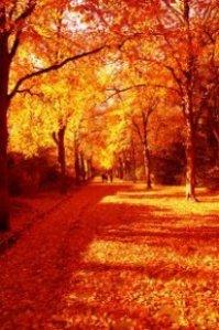 Autumn_Park_248596_l